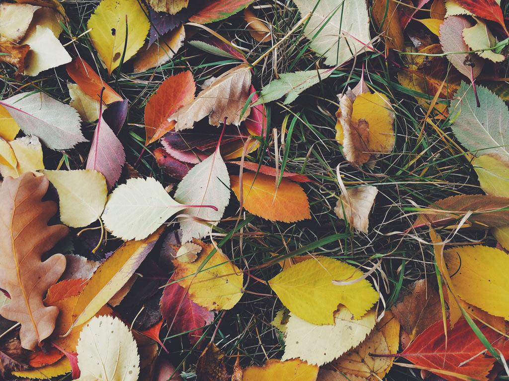pexels-photo-210932